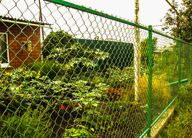 забор из сетка рабица
