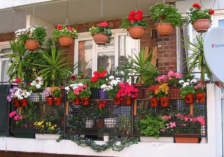 Подбираем цветы для балкона: солнечная сторона